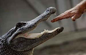 Alligator Vandalizes Florida Cop Car