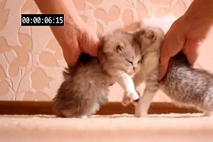 Russian Man Makes Adorable Kitten Crash Test