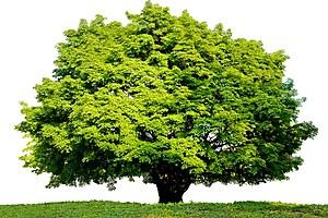 TreeOfFortune-FEAT